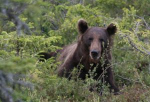 Portrait Bär1