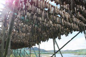 Stockfisch in Mehamn